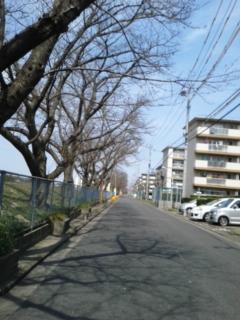 今日の桜並木は