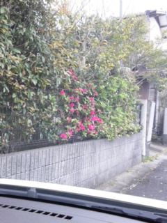 ツツジの花も